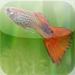 Brackishwater Aquarium Fish